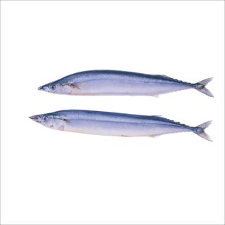 急冻 秋刀鱼